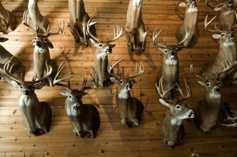 Thieves On The Run After Stealing $1.5 Million Worth Of Antlers