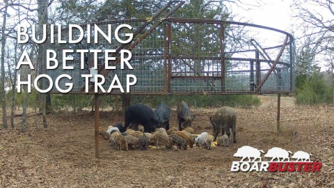 BoarBuster Traps Pile of Wild, Unhappy Boars in Viral Video