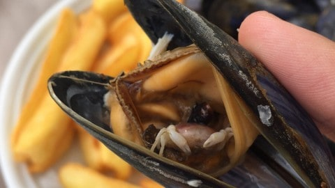 Shocked Diner Finds A Tiny Crab Inside Their Mussel
