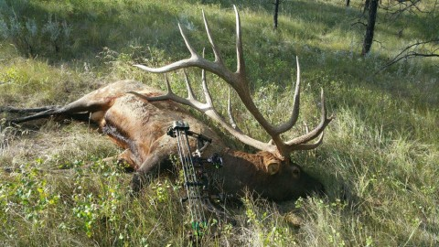 Potential New World-Record Elk Harvested In Montana