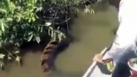 Incredible, Dangerous Video of Boaters and Massive Anaconda