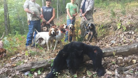 Hunter Attacked By Black Bear He Thought He'd Killed