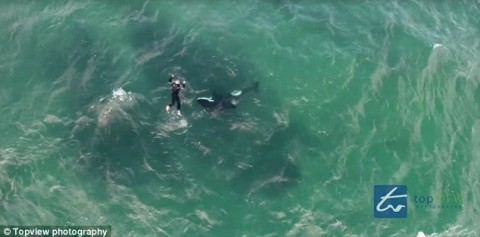 Man Ditches Kayak, Swims with Killer Whales in Pulse Pounding Video