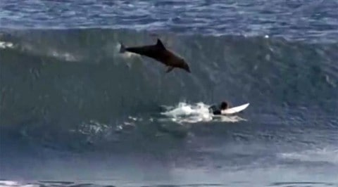 Dolphin Jumps on Teenage Surfer, Destroys Surfboard