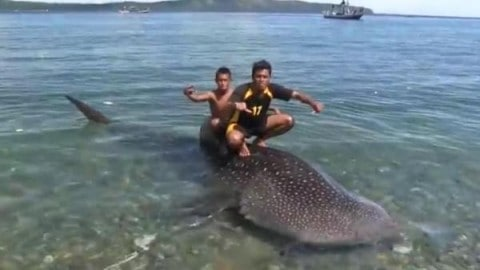 Scuba Diver Pays Fishermen $75 To Release Whale Shark
