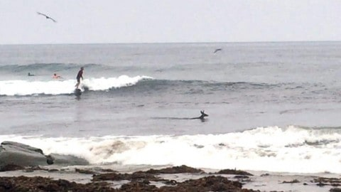 Surfers Catching a Wave Have a Big Surprise … a Deer?!?!