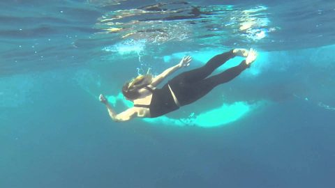 Divers Get A Giant Surprise While Searching For Turtles