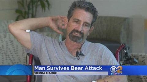 "Hiker Interrupts ""Mating Bears"", Immediately Gets Attacked"