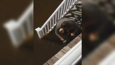 Video: Literally Catching Fish From Back Porch During Hurricane Matthew