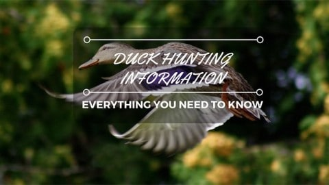 Everything You Need to Know About Duck Hunting Season