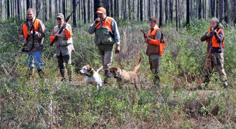 Judge Rules Deer-Dog Hunters Stay Off Private Property