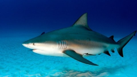 Fisherman Attacked And Killed By Shark As Friend Watches In Horror