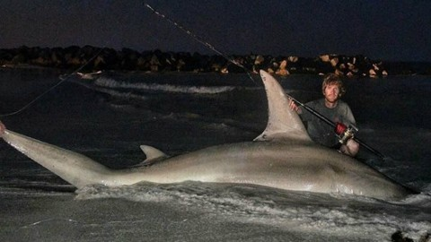Massive Hammerhead Shark Falls Short of World Record Because of Technicality