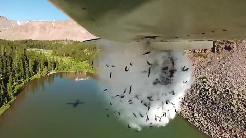Amazing Video of Plane Dropping Thousands of Fish into Remote Lake