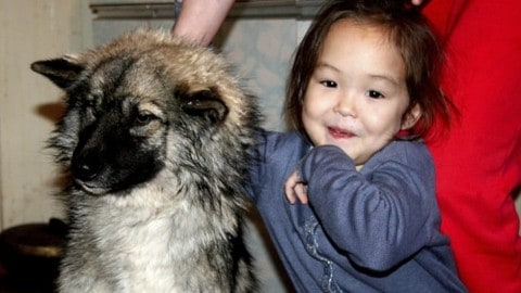 Missing 4-Year-Old Girl's Dog Helped Her Survive 11 Days in the Wilderness