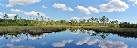 Video: CCA Reveals Strong Stance on Florida Ecosystem Issues