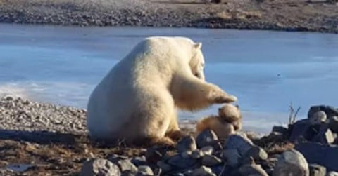 See Polar Bear Pet Bravest Dog Alive, Creating an Unlikely Pair of Best Friends