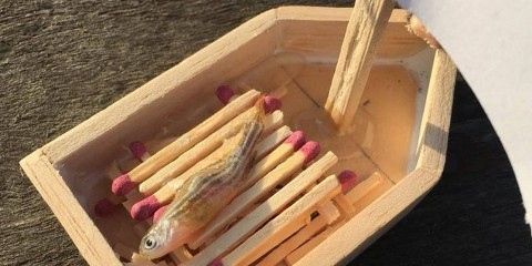 Dead Pet Fish Gets the Proper Viking Funeral He Deserved
