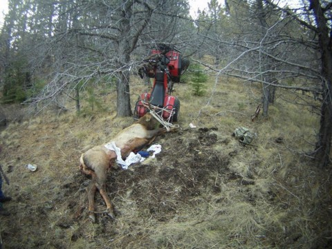 Hunter Gets Impaled by Elk He Just Killed