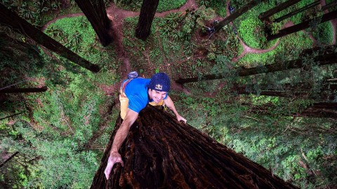 This Maniac Free Climbs a Massive Redwood Like It's Nothing