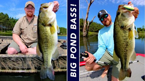 Want Big Bass in Your Pond? Here's How to Get Them