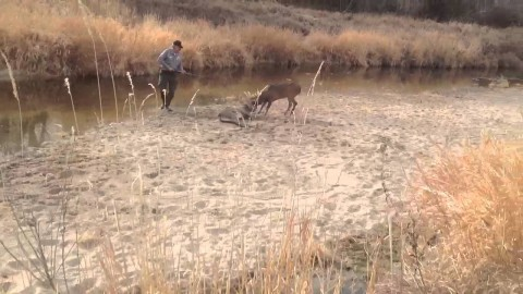 See the Insanely Accurate Shot to Free a Live Buck Locked With a Dead Buck