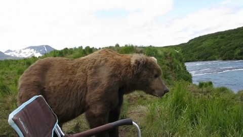 Massive Grizzly Bear Walks Up, Hangs Out Next to Shocked Photographer