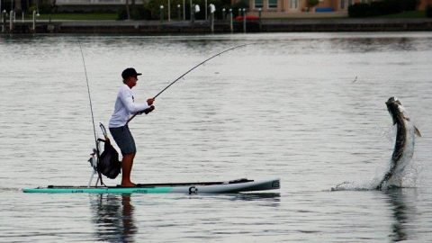 """Good Timing"" – The Story Behind the Viral, Epic Tarpon Photo"