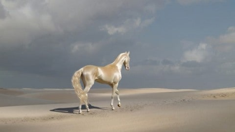 "See Photos and Video of the ""Most Beautiful Horses in the World"""