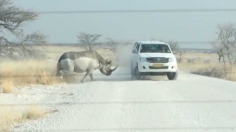 See Road Rage Rhino Ram SUV Full of Tourists at Full Speed