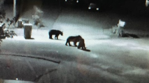 Man and His Dog Injured in Suburban Bear Attack