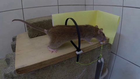 This Zip Tie Mouse Trap Makes Old Traps Obsolete