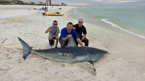 Group of Veterans and Enlisted Military Land 10-Foot Mako Shark from Shore in Rare Catch