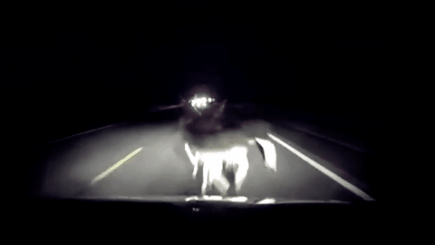 Driver Hits 3 Deer at Once in Life or Death Decision