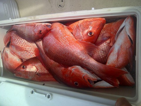FWC Will Approve a 78-Day Red Snapper Season