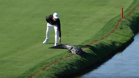 PGA Golfer Cody Gribble Slaps a Gator on its Tail to Make it Move