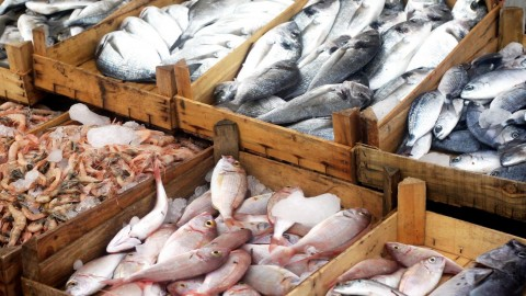 Seafood Sting Busts 28,000 Pounds Of Illegally Caught Fish