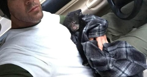 Man Faces Backlash After Rescuing Abandoned Bear Cub and Giving it CPR