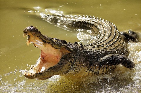 Internet Falls for Viral Story About Pastor Getting Eaten by Crocodiles While Attempting to Walk on Water