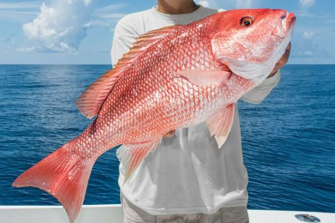 Gulf of Mexico 2017 Red Snapper Season Now ONLY 3 Days Long