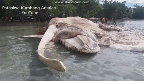 Mysterious 50-Foot Sea Creature Washes Up on Shore, Goes Viral and Gets Identified