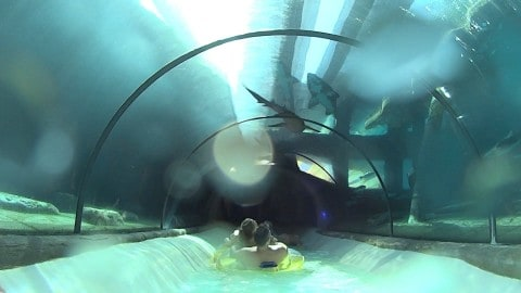 Incredible Waterslide Takes an Aquarium Loaded With Sharks