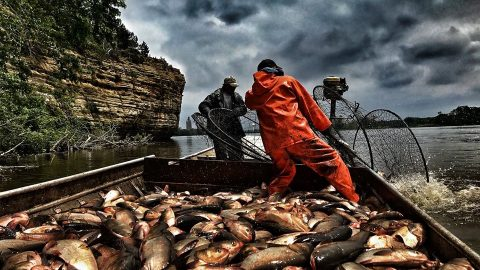 DNR Pulls 70,000 Pounds of Carp from the Illinois River