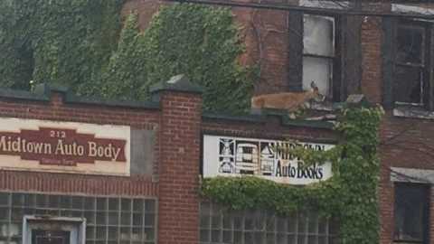 That's Not a Mirage: Deer Finds Its Way onto the Roof of an Auto Parts Store