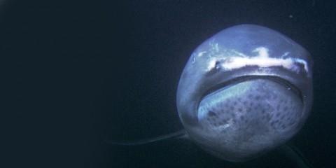 VIDEO: Diver Spots Rare 'Alien-Like' Megamouth Shark Off the Coast