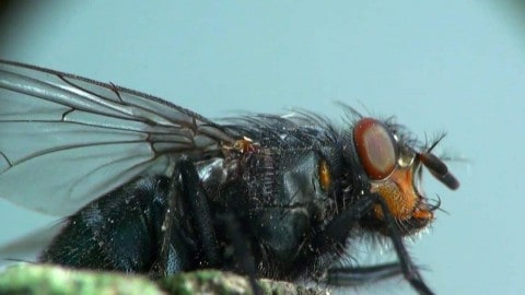 VIDEO: There's a Pretty Good Reason Why It Can be Really Hard to Swat a Fly