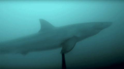 GoPro Captures Great White Shark Encounter That Gets WAY Too Close for Comfort