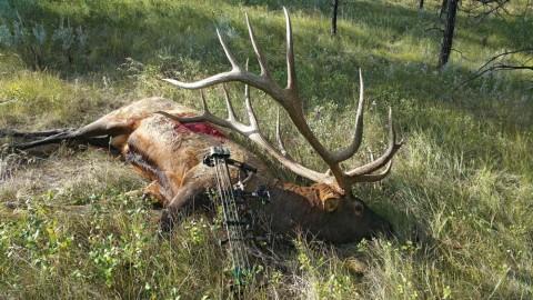 New World-Record Archery Elk Shot on Public Land