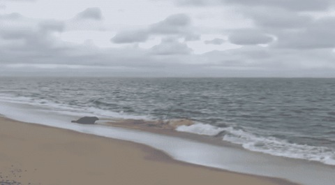 Family Captures Footage As Great White Shark Attacks A Seal