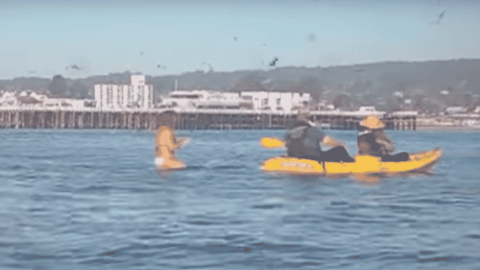 VIDEO: Humpback Whale Nearly Swallows Surfer Whole As She's Filming